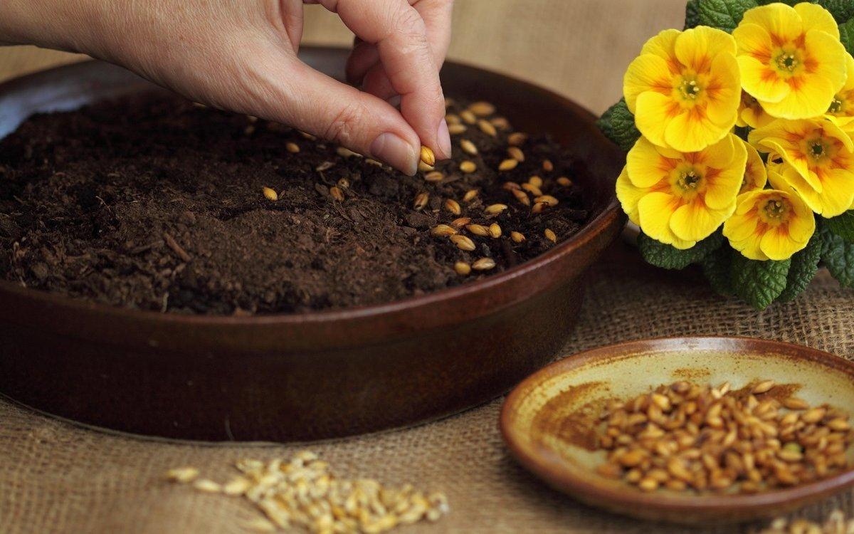 срок хранения семян петрушки